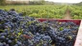 vista previa del artículo Presentada la candidatura al «Paisaje Cultural del vino y el viñedo de La Rioja y la Rioja Alavesa»
