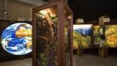 vista previa del artículo «El bosque. Mucho más que madera» se expone en Bilbao